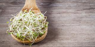 Tot ce trebuie să știi despre germeni și câteva rețete delicioase în care să-i adaugi